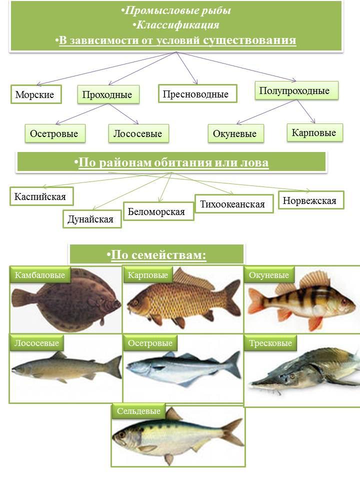 Промысловые рыбы - копия