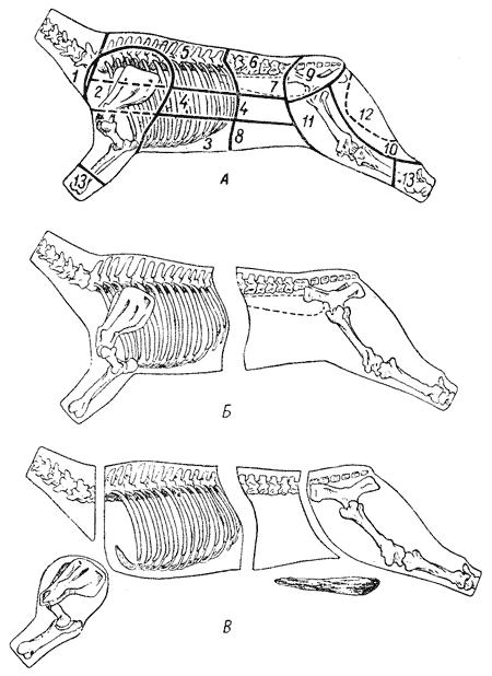 А — схема расположения частей мякоти, получаемой при кулинарном разрубе и обвалке туши говядины: 1 — шея, 2 — лопатка, 3 — грудинка, 4 — покромка, 5 — толстый край, 6 — тонкий край, 7 — вырезка, 8 — пашина, 9 — верхняя часть задней ноги, 10 — наружная часть задней ноги, 11 — боковая часть задней ноги, 12 — внутренняя часть задней ноги, 13- голяшка; Б и В — схемы разруба туши говядины