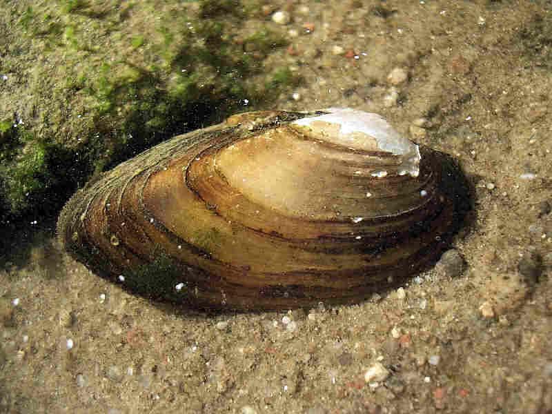сюрнаме: стихи о моллюске