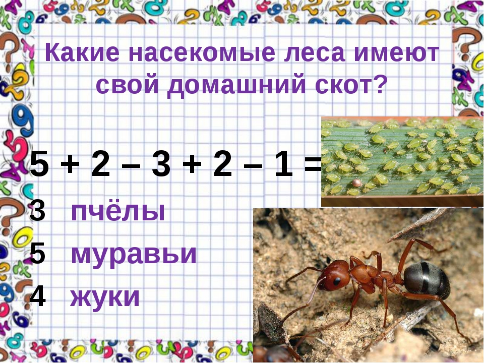 Какие насекомые леса имеют свой домашний скот? 5 + 2 – 3 + 2 – 1 = 3 пчёлы 5...