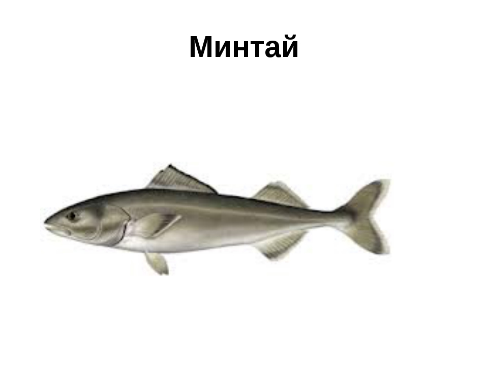 Минтай