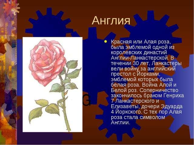 Англия Красная или Алая роза, была эмблемой одной из королевских династий Анг...