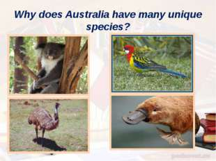 Why does Australia have many unique species?