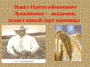 Павел Пантелеймонович Лукьяненко – академик, вывел новый сорт пшеницы