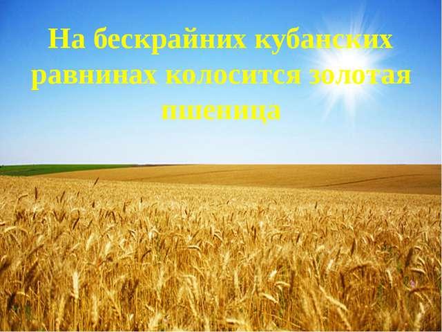 На бескрайних кубанских равнинах колосится золотая пшеница