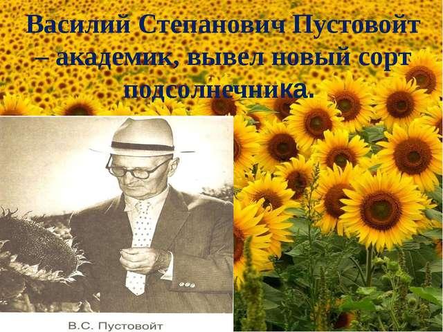 Василий Степанович Пустовойт – академик, вывел новый сорт подсолнечника.