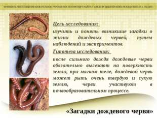 Цель исследования: изучить и понять возникшие загадки о жизни дождевых червей