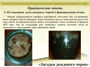4. Исследование роли дождевых червей в формировании почвы. МУНИЦИПАЛЬНОЕ ОБЩЕ