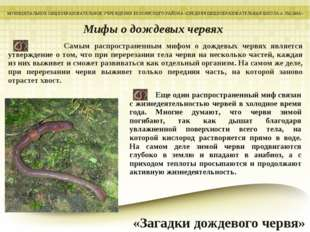 Самым распространенным мифом о дождевых червях является утверждение о том, ч