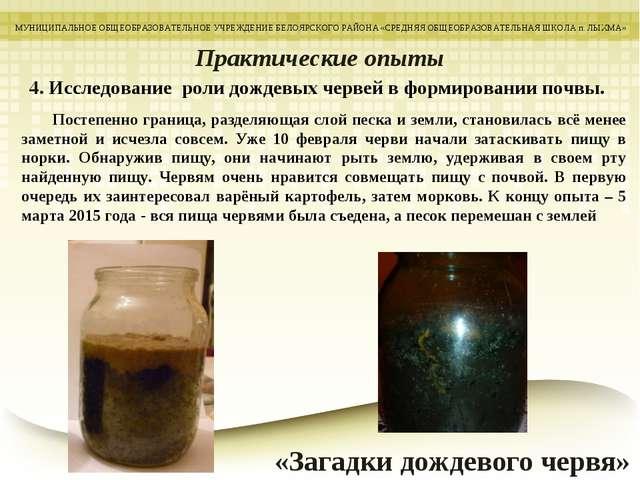 4. Исследование роли дождевых червей в формировании почвы. МУНИЦИПАЛЬНОЕ ОБЩЕ...