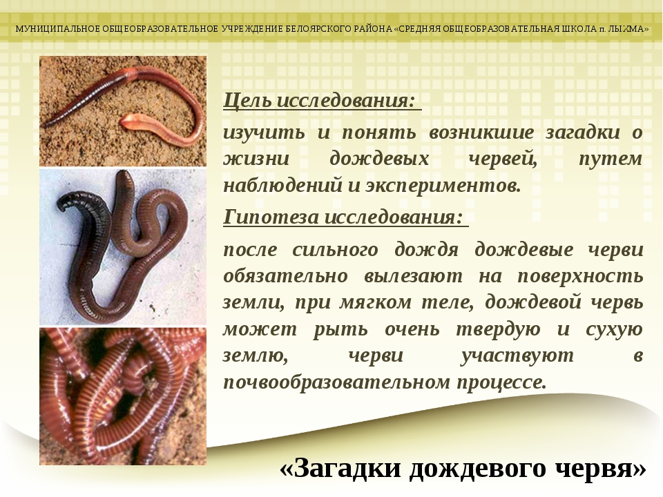 Цель исследования: изучить и понять возникшие загадки о жизни дождевых червей...