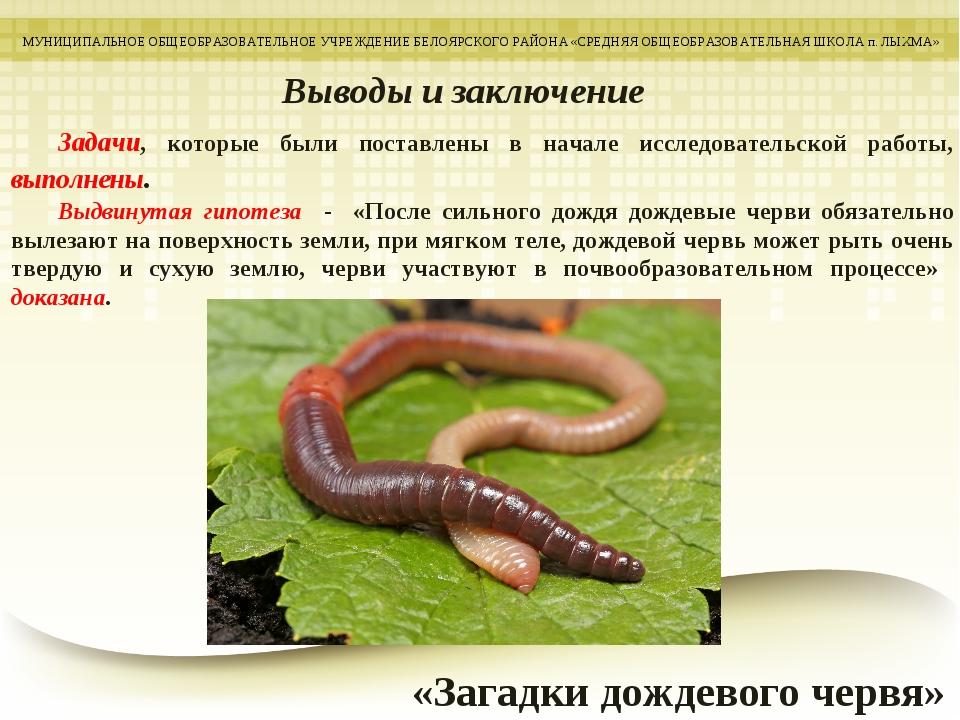 дождевой червь краткое описание