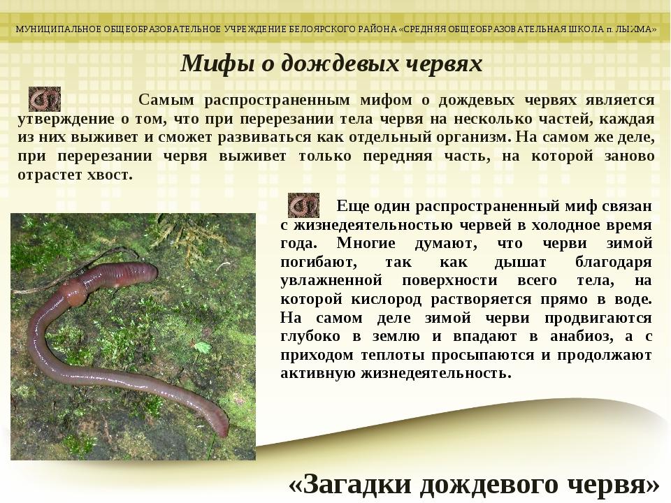 Самым распространенным мифом о дождевых червях является утверждение о том, ч...