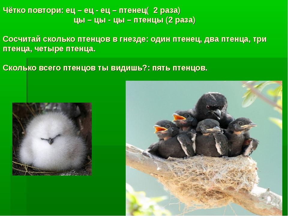 Чётко повтори: ец – ец - ец – птенец( 2 раза) цы – цы - цы – птенцы (2 раза)...
