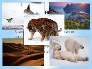 Прекрасна планета Земля… Разнообразны природные условия Земли, и населяющие п