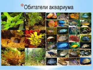 Обитатели аквариума Продуцентами органического вещества в аквариуме (как и в