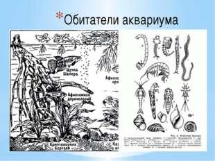 Обитатели аквариума Любителям – аквариумистам известно большое число видов ак