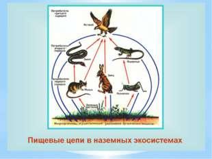 ПИЩЕВЫЕ ЦЕПИ Группа видов растений , животных, грибов и микроорганизмов, связ