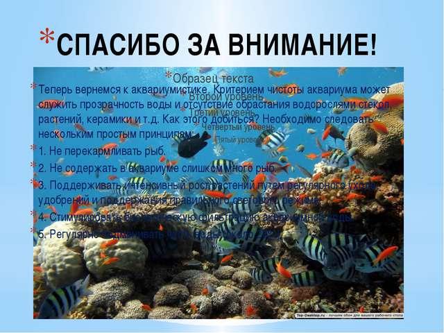 СПАСИБО ЗА ВНИМАНИЕ! Теперь вернемся к аквариумистике. Критерием чистоты аква...