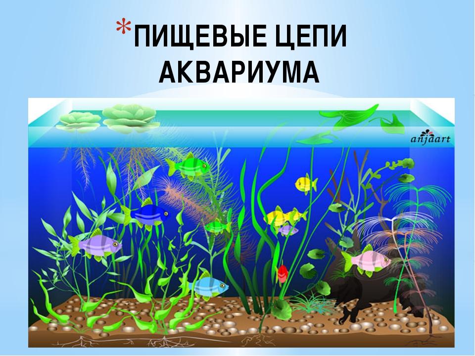 ПИЩЕВЫЕ ЦЕПИ АКВАРИУМА Составьте схемы пищевых цепей аквариума, в котором оби...