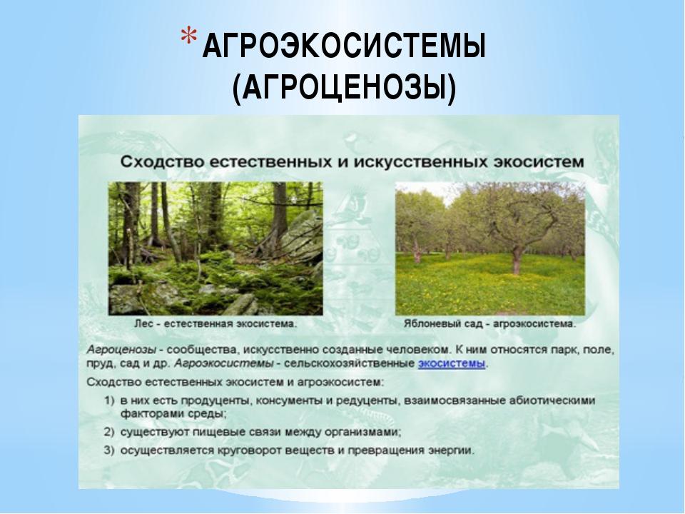 Почему агробиоценозы считаются неустойчивыми экосистемами