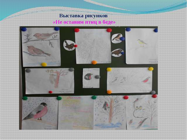 Выставка рисунков «Не оставим птиц в беде»