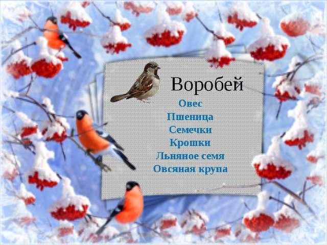 Воробей Овес Пшеница Семечки Крошки Льняное семя Овсяная крупа