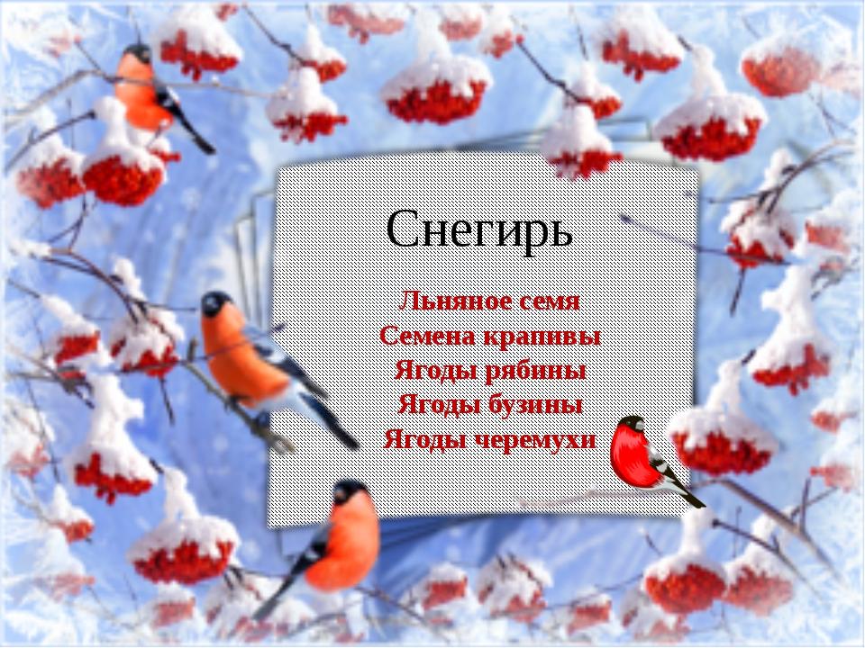 Снегирь Льняное семя Семена крапивы Ягоды рябины Ягоды бузины Ягоды черемухи