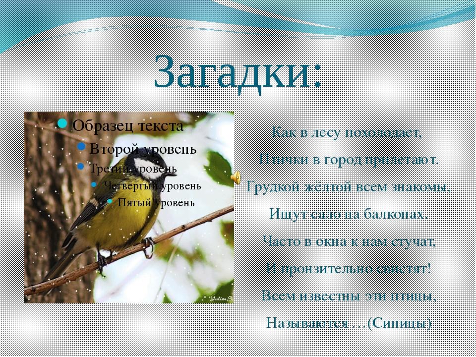Загадки: Как в лесу похолодает, Птички в город прилетают. Грудкой жёлтой всем...