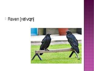 Raven [reIvqn]
