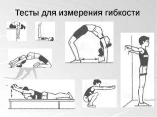 Тесты для измерения гибкости