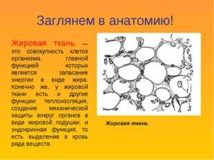 Заглянем в анатомию! Жировая ткань — это совокупность клеток организма, главн