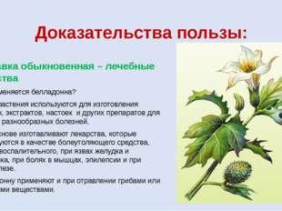 Доказательства пользы: Красавка обыкновенная – лечебные свойства Где применяе
