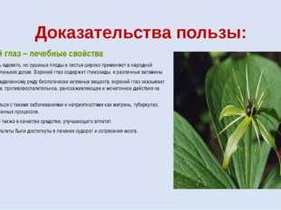 Доказательства пользы: Вороний глаз – лечебные свойства Растение очень ядовит