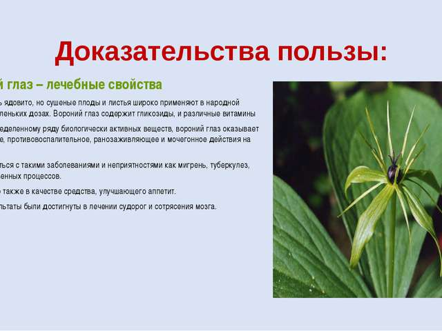 Доказательства пользы: Вороний глаз – лечебные свойства Растение очень ядовит...