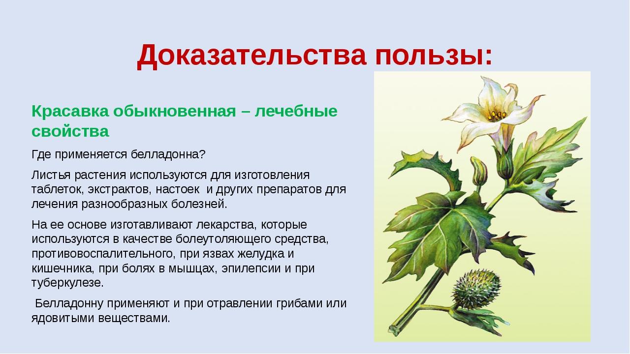 Доказательства пользы: Красавка обыкновенная – лечебные свойства Где применяе...
