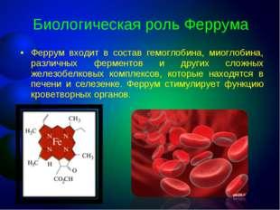 Биологическая роль Феррума Феррум входит в состав гемоглобина, миоглобина, ра