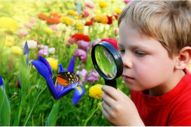 2-1-curios-child-looking-at-butterfly.jpg