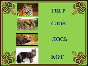ТИГР СЛОН ЛОСЬ КОТ