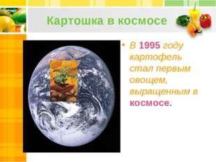 Картошка в космосе В 1995 году картофель стал первым овощем, выращенным в кос