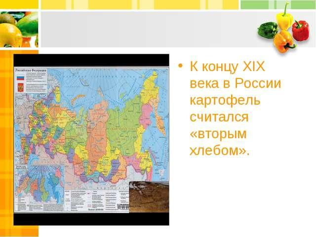 К концу XIX века в России картофель считался «вторым хлебом».