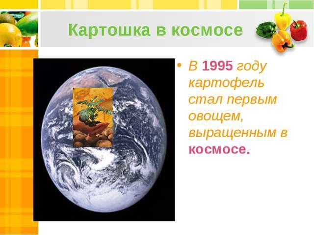 Картошка в космосе В 1995 году картофель стал первым овощем, выращенным в кос...