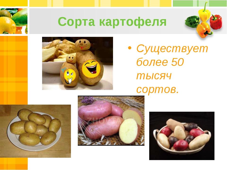 Сорта картофеля Существует более 50 тысяч сортов.