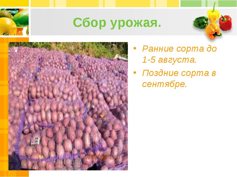Сбор урожая. Ранние сорта до 1-5 августа. Поздние сорта в сентябре.