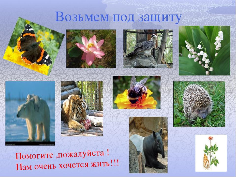 Возьмем под защиту Помогите ,пожалуйста ! Нам очень хочется жить!!!