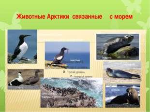 Животные Арктики связанные с морем