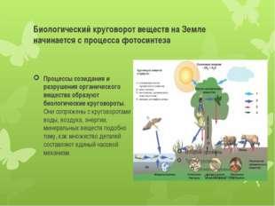 Биологический круговорот веществ на Земле начинается с процесса фотосинтеза П