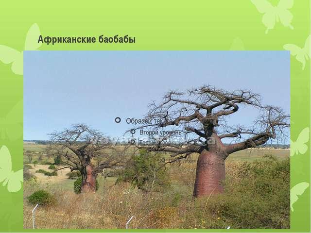 Африканские баобабы