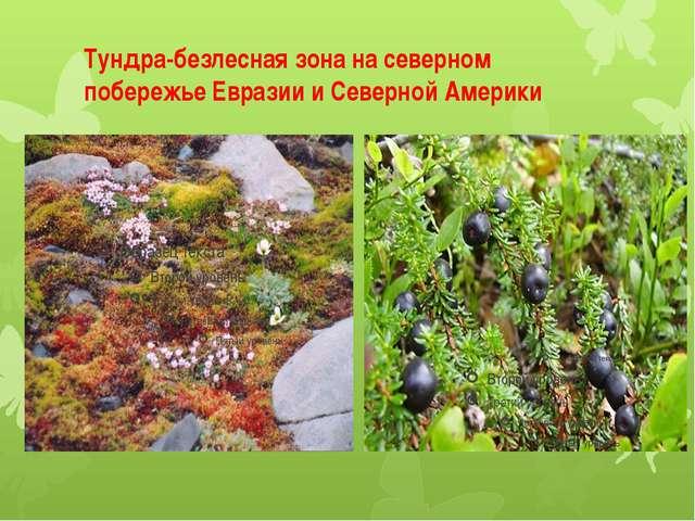 Тундра-безлесная зона на северном побережье Евразии и Северной Америки
