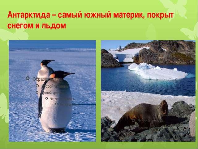 Антарктида – самый южный материк, покрыт снегом и льдом
